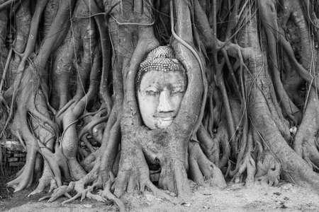 ncient Buddha head in root of banyan tree ,Ayutthaya, Thailand Stock Photo