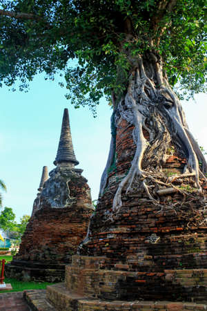 Banyan tree in pagoda ,Ayutthaya, Thailand
