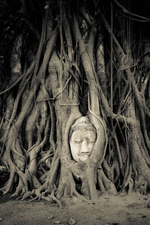 Ancient Buddha head in root of banyan tree