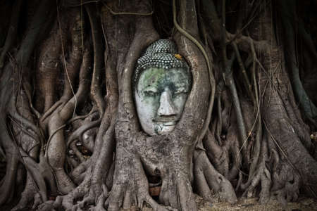 The head of the sandstone buddha in roots of tree,Ayutthaya,Thailand photo
