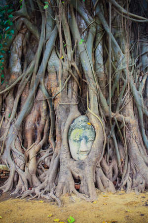Head of Sandstone Buddha in roots at Wat Mahathat, Ayutthaya, Thailand photo