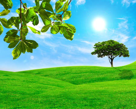 Green leaf and  tree in grass field with blue sky photo