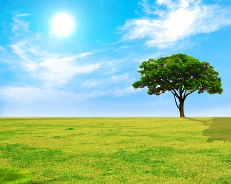Lonely tree on Yellow and grass field on blue sky