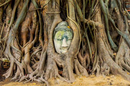 of siam: Head of Sandstone Buddha in The Tree Roots at Wat Mahathat, Ayutthaya, Thailand