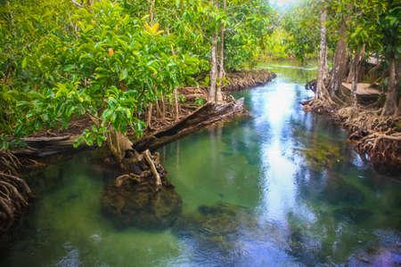 Tha Pom nature trail and Crystal stream, Krabi, Thailand photo