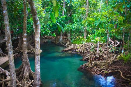 thapom: Tha pom nature trail and Crystal stream, Krabi, Thailand