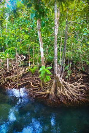 klong: Tha pom nature trail and Crystal stream, Krabi, Thailand