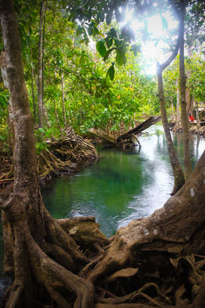 Tha pom nature trail and Crystal stream, Krabi, Thailand photo