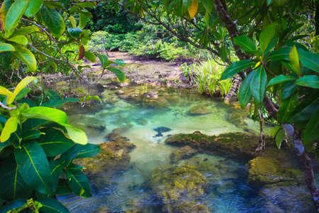 th�?¨: Tha pom sendero natural y el arroyo cristalino, Krabi, Tailandia Foto de archivo