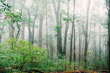nature green: �rboles forestales. naturaleza verde