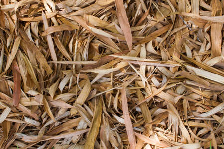 Many dry bamboo leaves as a background
