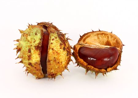 Wild chestnut in shells, isolated Stock Photo - 6024629