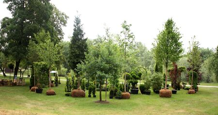 Trees ready for planting in the park