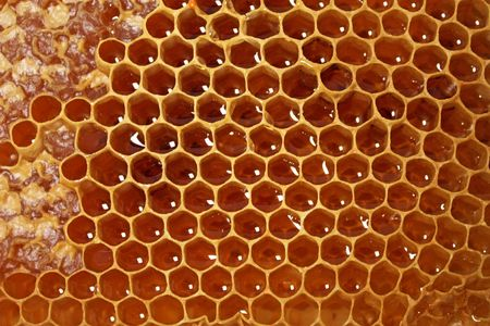 Honeycomb filled with honey isolated on white