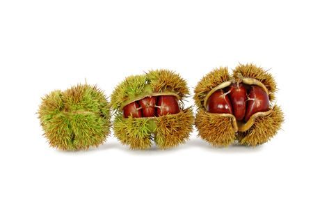 Chestnuts inside husk isolated on white Stock Photo
