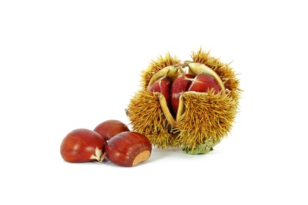 Chestnuts inside husk isolated on white background Stock Photo - 8656365