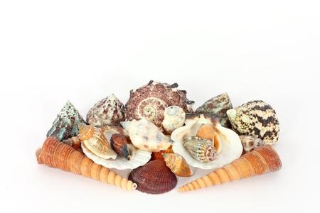 Heap of seashells isolated on  white photo