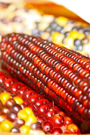 Close up of colorful dried indian corns photo