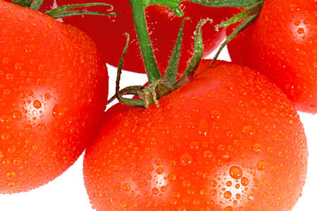 Red tomatoes on the branch isolated on white photo