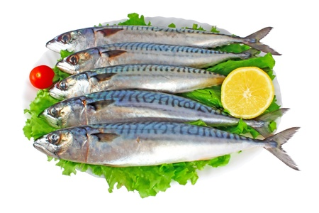 Mackerels on plate isolated on white background photo