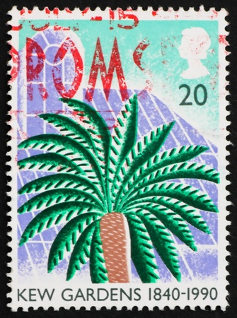 cycad: GREAT BRITAIN � CIRCA 1990: a stamp printed in the Great Britain shows Cycad, 150th anniversary of Kew Gardens, circa 1990 Stock Photo