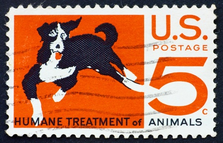 Humane: UNITED STATES OF AMERICA - CIRCA 1966: a stamp printed in the United States of America shows Mongrel dog, humane treatment of all animals, circa 1966