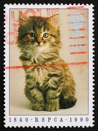 perforated stamp: GREAT BRITAIN – CIRCA 1990: a stamp printed in the Great Britain shows Kitten, 150th Anniversary of Royal Society for the Prevention of Cruelty to Animals, circa 1990 Stock Photo
