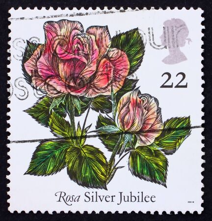GREAT BRITAIN - CIRCA 1989: a stamp printed in the Great Britain shows Rose Silver Jubilee, circa 1989 photo