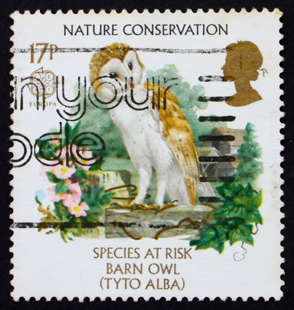 GREAT BRITAIN - CIRCA 1986: a stamp printed in the Great Britain shows Barn owl, endangered species, circa 1986 photo