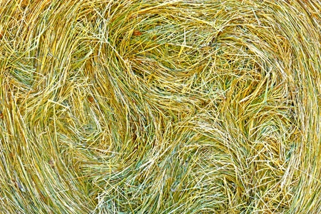 Hay from freshly cut grass, close up photo