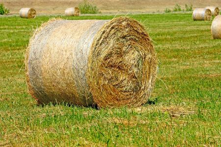 Hay bale from freshly cut grass, close up photo