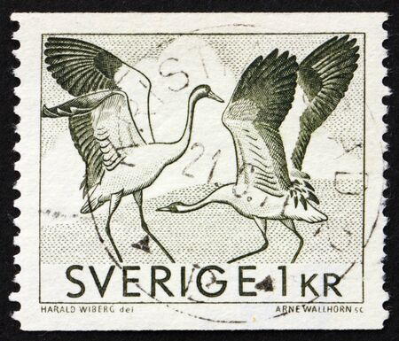 SWEDEN - CIRCA 1967: a stamp printed in the Sweden shows Dancing cranes, circa 1967 photo