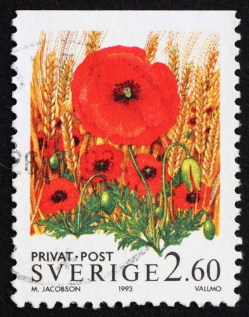 SWEDEN - CIRCA 1993: a stamp printed in the Sweden shows Poppy Flowers, circa 1993 Stock Photo - 11926001