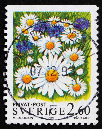 SWEDEN - CIRCA 1993: a stamp printed in the Sweden shows Oxe-eye Daisy Flowers, circa 1993 Stock Photo - 11926009
