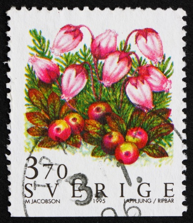 SWEDEN - CIRCA 1995: a stamp printed in the Sweden shows Mountain Heath Flower, Phyllodoce Caerulea, circa 1995 Stock Photo - 11926005
