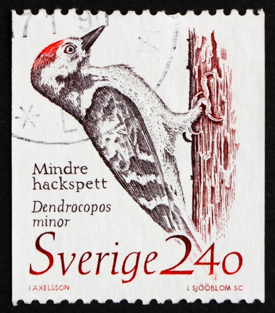 woodpecker: SWEDEN - CIRCA 1989: a stamp printed in the Sweden shows Woodpecker, Dendrocopos Minor, circa 1989 Stock Photo
