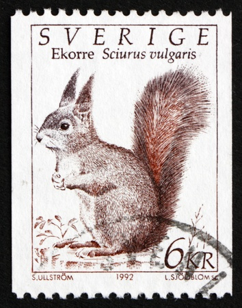 squirrel isolated: SWEDEN - CIRCA 1993: a stamp printed in the Sweden shows Squirrel, Sciurus Vulgaris, Wild animal, circa 1993 Stock Photo