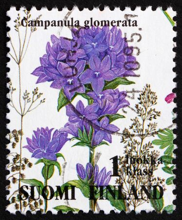 FINLAND - CIRCA 1993: a stamp printed in the Finland shows Clustered Bellflower, Campanula Glomerata, circa 1993 Stock Photo - 11926025