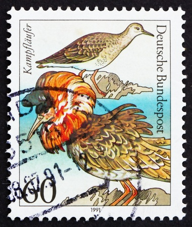ruff: GERMANY - CIRCA 1981: a stamp printed in the Germany shows Sea Birds, Ruff, Philomachus Pugnax, circa 1981
