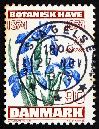 DENMARK - CIRCA 1974: a stamp printed in the Denmark shows Iris Flower, Centenary of Copenhagen Botanical Garden, circa 1974 Stock Photo - 12012471