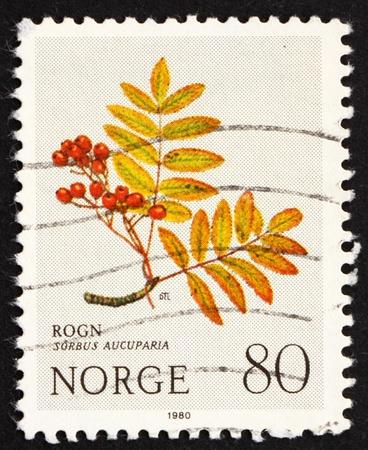 NORWAY - CIRCA 1980: a stamp printed in the Norway shows European Rowan, Sorbus Aucuparia, Mountain Flower, circa 1980