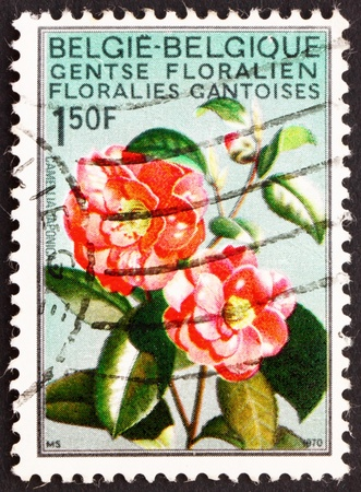 BELGIUM - CIRCA 1967: a stamp printed in the Belgium shows Camellia, Flower, International Flower Exhibition in Gent, circa 1967 Stock Photo - 12846852