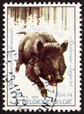 BELGIUM - CIRCA 1974: a stamp printed in the Belgium shows Wild Boar, Regimental Emblem, circa 1974 photo