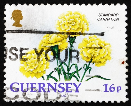 bailiwick: BAILIWICK OF GUERNSEY - CIRCA 1992: a stamp printed in the Guernsey shows Standard Carnation, Flower, circa 1992 Editorial