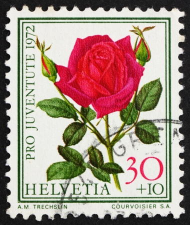 perforated stamp: SWITZERLAND - CIRCA 1972: a stamp printed in the Switzerland shows Rose, Papa Meilland, Flowering Plant, circa 1972