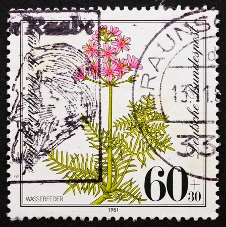 gillyflower: GERMANY - CIRCA 1981: a stamp printed in the Germany shows Water Gillyflower, Hottonia Palustris, Endangered Species, circa 1981