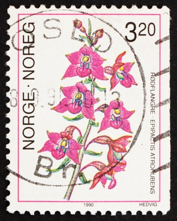 NORWAY - CIRCA 1990: a stamp printed in the Norway shows Dark Red Helleborine, Epipactis Atrorubens, European Orchid, circa 1990 Stock Photo - 13512307