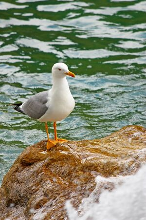 Gull on a rock at the foot of a waterfall Stock Photo - 13551287