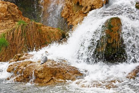 Gull on a rock at the foot of a waterfall Stock Photo - 13551300