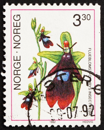 NORWAY - CIRCA 1992: a stamp printed in the Norway shows Fly Orchid, Ophrys Insectifera, European Orchid, circa 1992 Stock Photo - 13558815